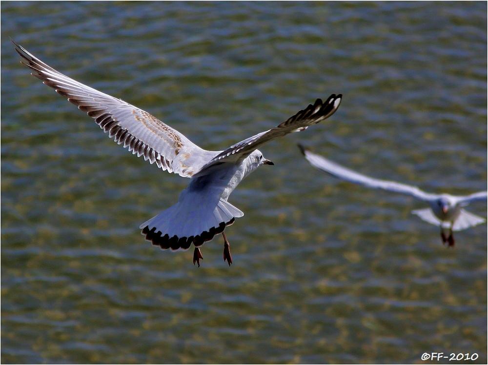 Landung und Start