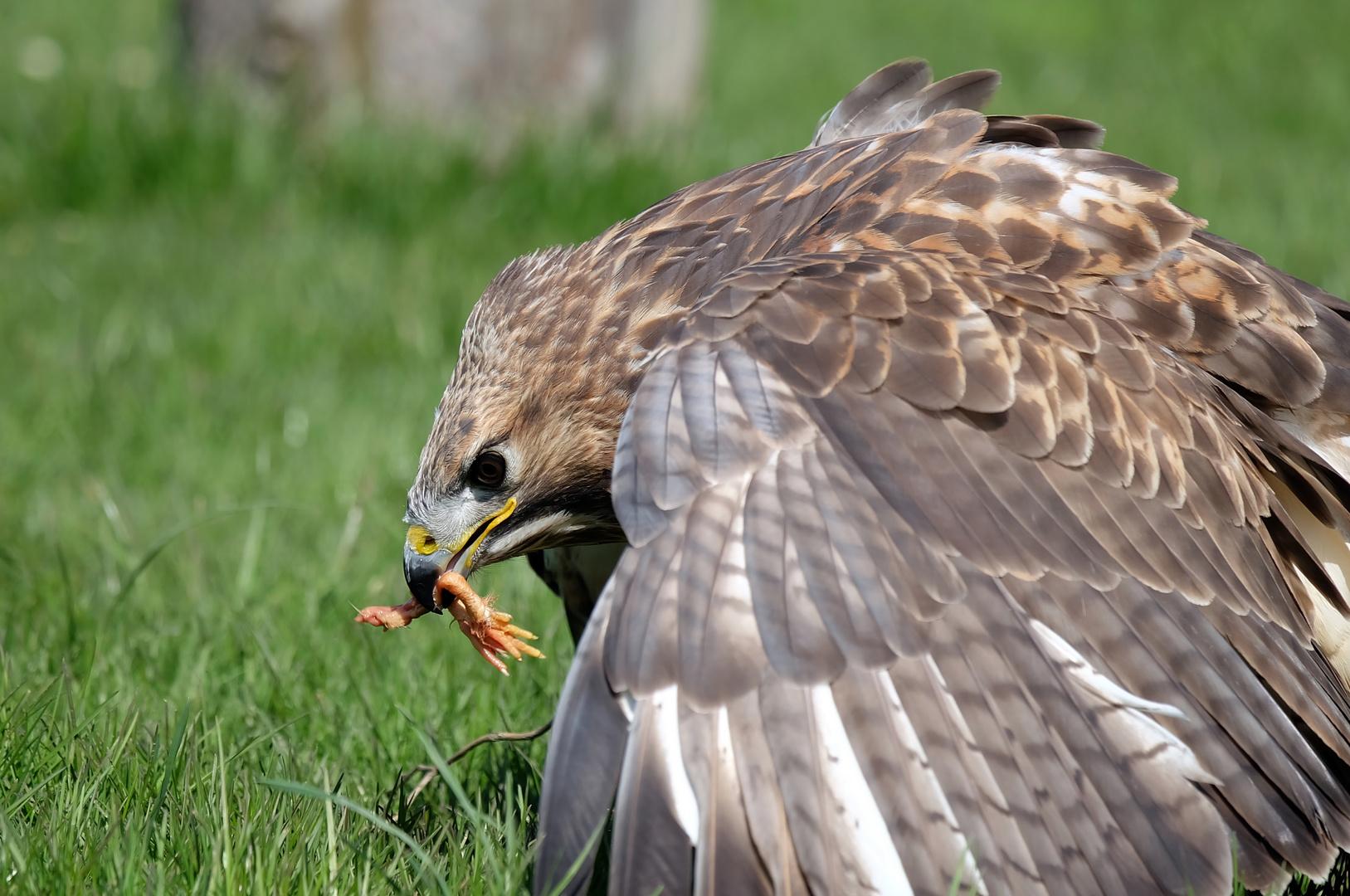 Landung zur Mahlzeit