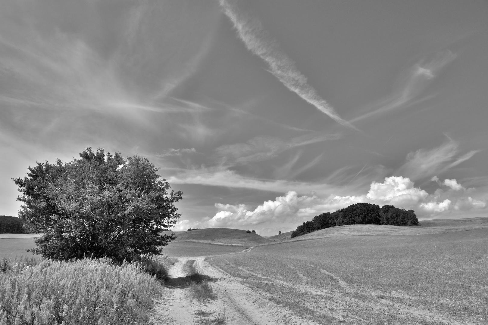 Landweg auf Rügen