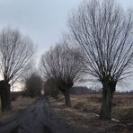 Landweg im Maerz