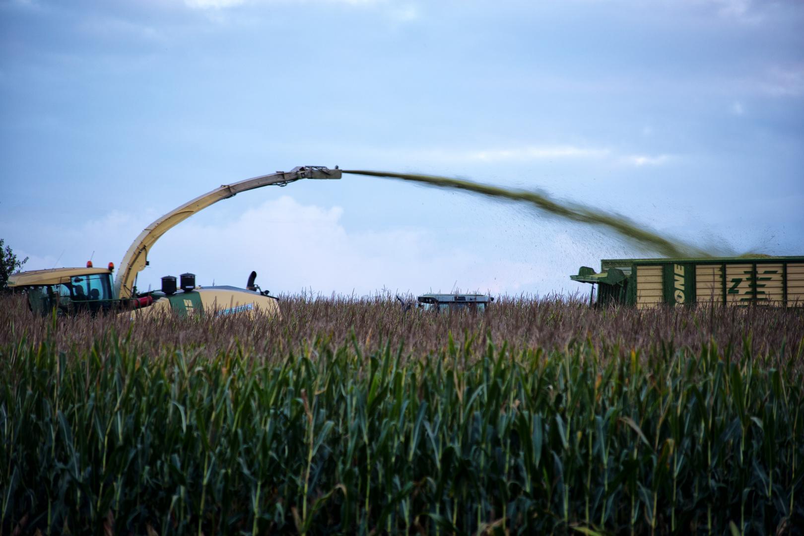 Landwirts Treffsicherheit