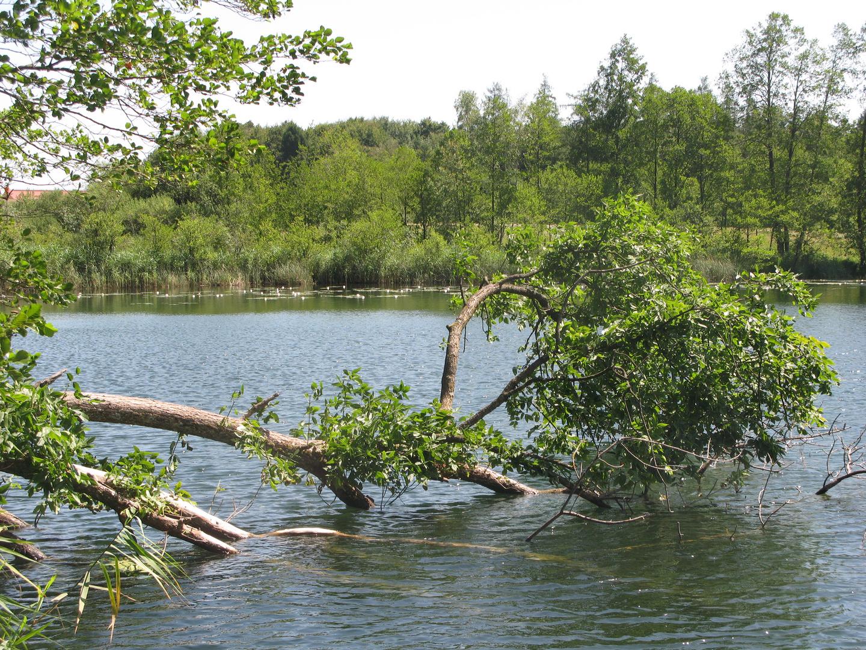 Langbürgener See im Chiemgau