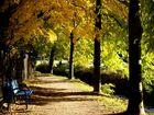 Lange Herbstschatten am Sulzbach in Heitersheim