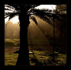 ...lange Schatten....