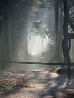 Langenberger Forst 1