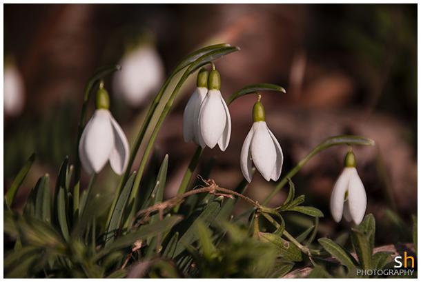 langsam kommt der Frühling