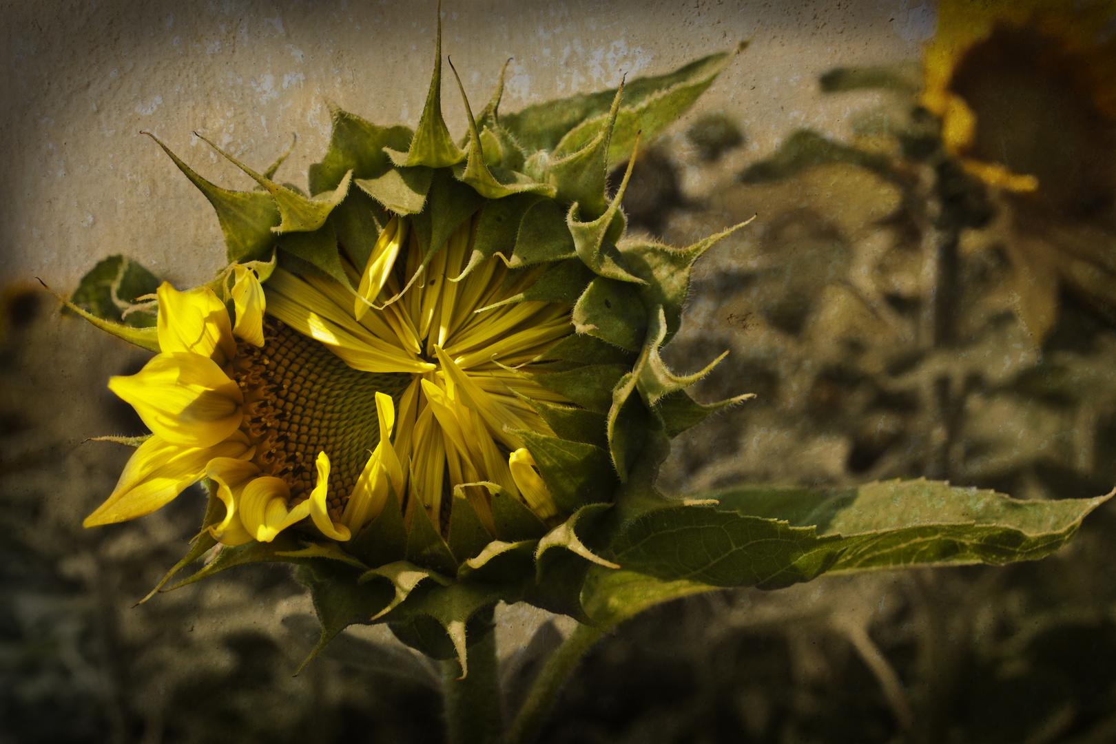 Langsam und behutsam öffnet sich ein neues Leben......