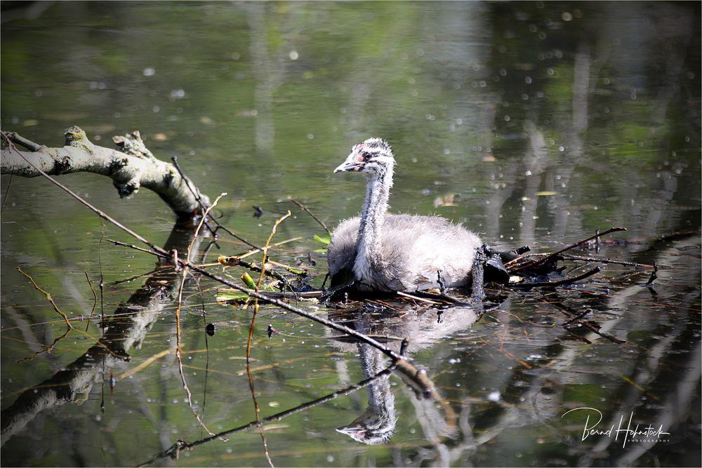 Langsam werden wir Erwachsen ... Naturpark Schwalm - Nette ....