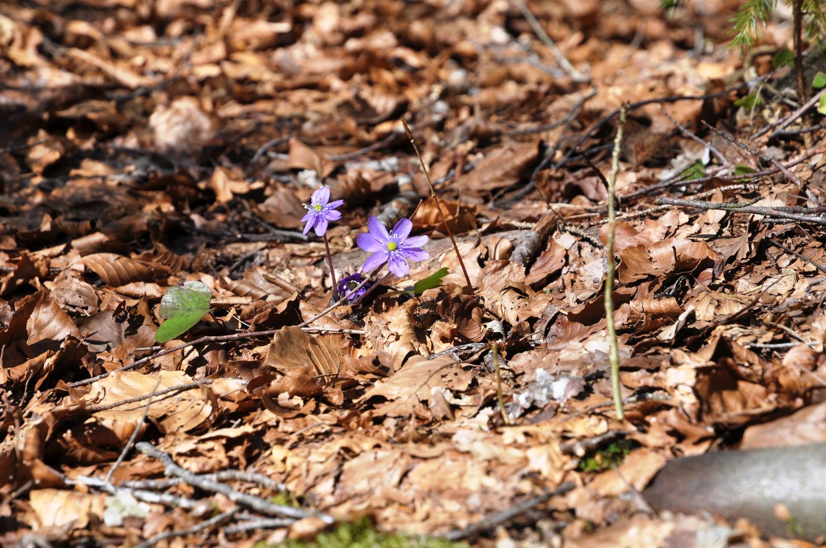 Langsam wird es Frühling