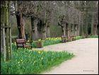 langsames Frühlingserwachen