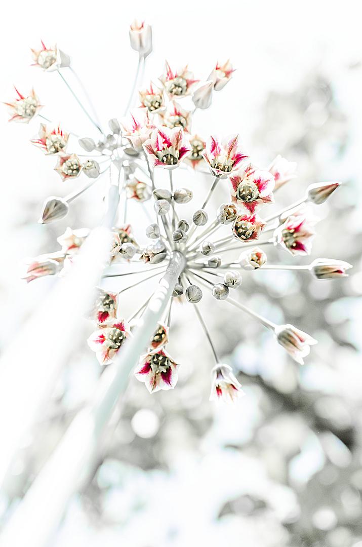 Langstielige Pflanze 1
