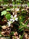 Lanz Photography of Art