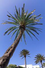 Lanzarote vor der Seuche ... Jameos del Agua (3)