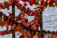 Lanzarote vor der Seuche ... Love Is All Around (1)