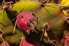 Lanzarote vor der Seuche ... nicht wirklich ein Blümchen