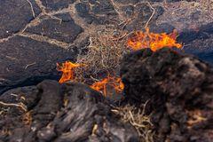 Lanzarote vor der Seuche ... Timanfaya (3) - trockene Sträucher brennen nach wenigen Sekunden
