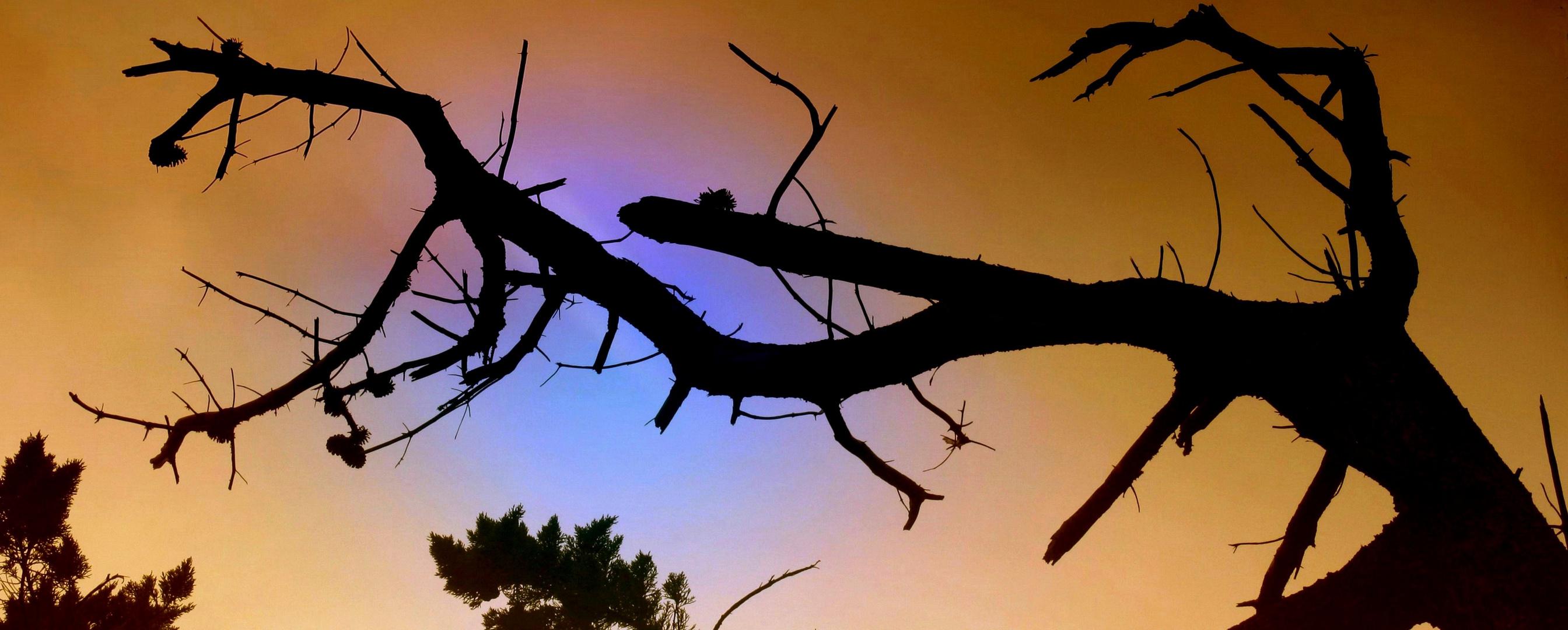 L'appel au secours de la forêt australienne...