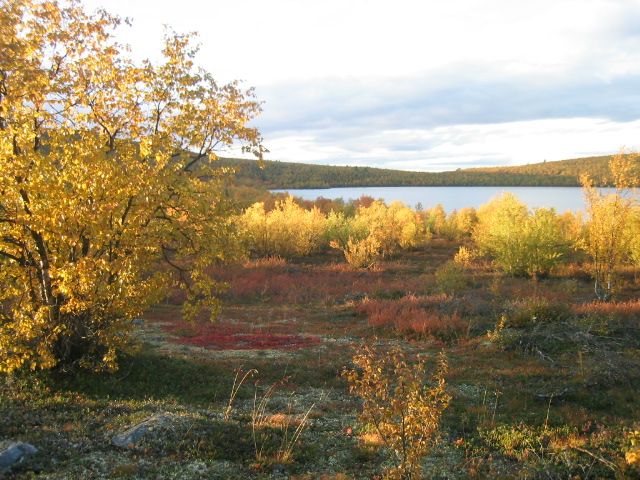 Lappland - Herbstimpression 2