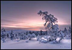 Lappland - Minus 36 Grad