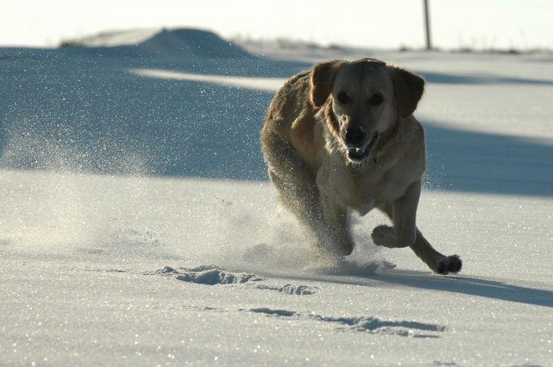 Lara im Schnee 2