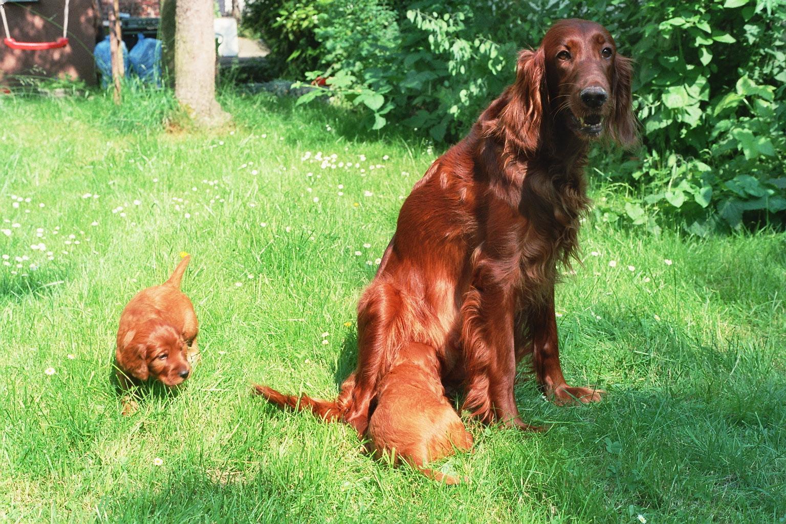 Lara und ihre Kinder