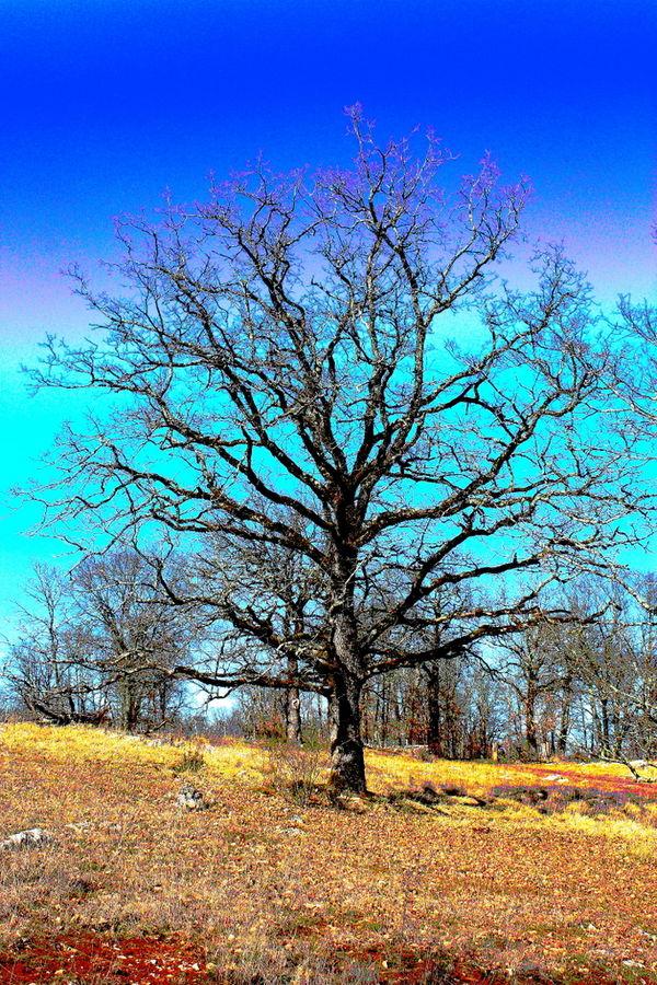 L'arbre aux couleurs