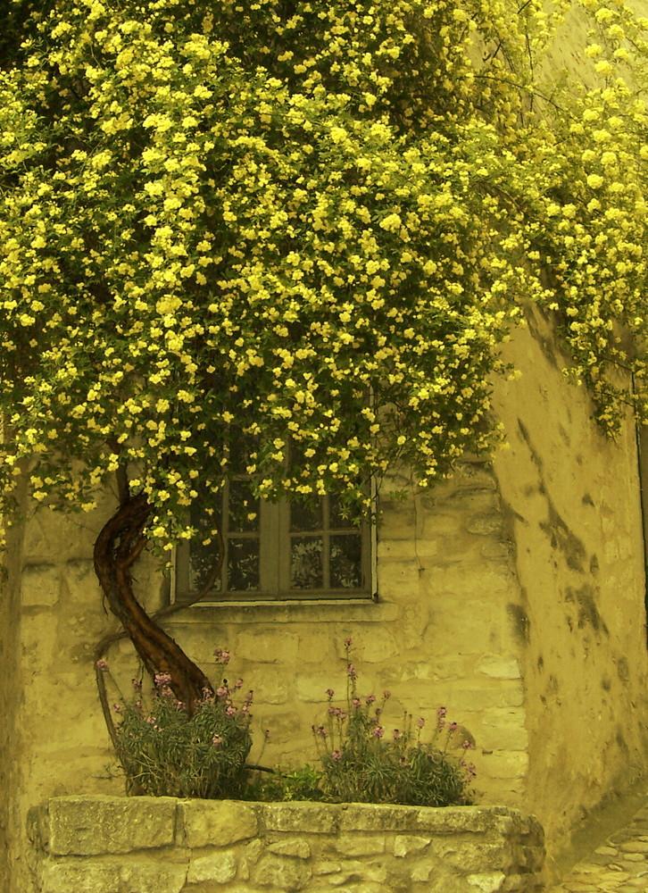 L'arbre aux fleurs