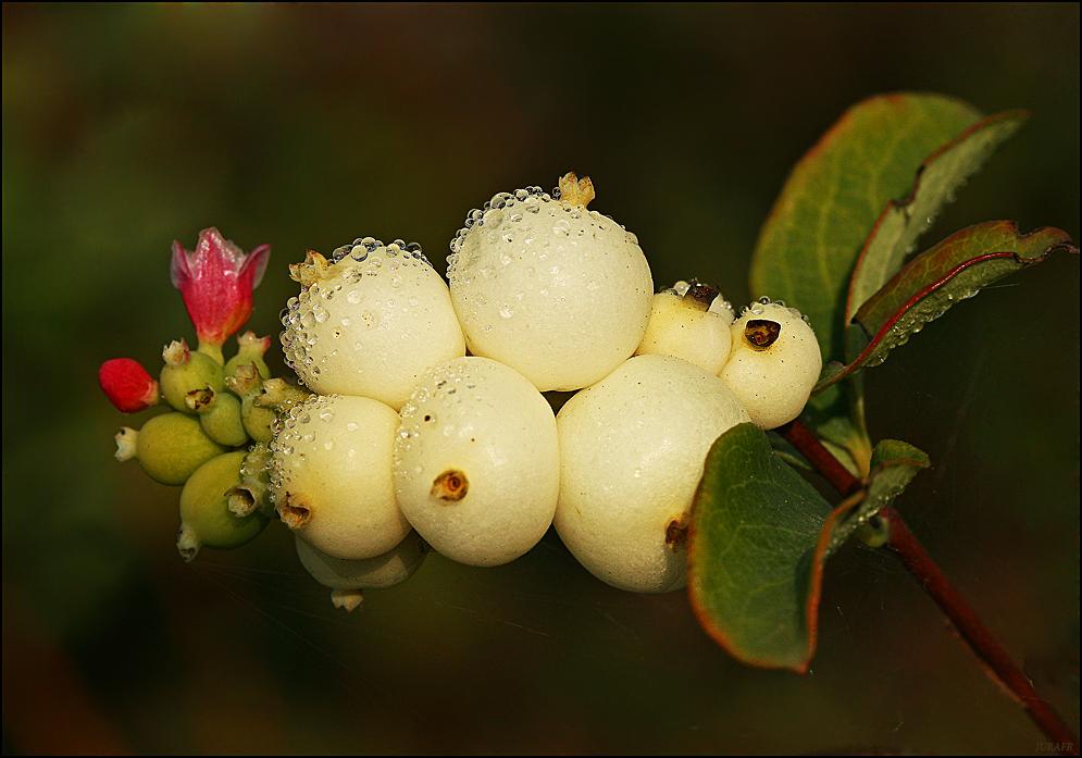 L'arbre aux perles.......