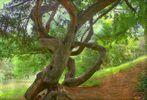 L'arbre aux tourments