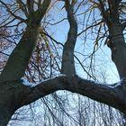 l'arbre des amoureux