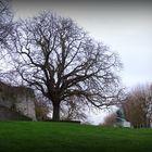 L'arbre d'Henri II