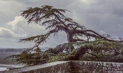 - L'Arbre du Mont -