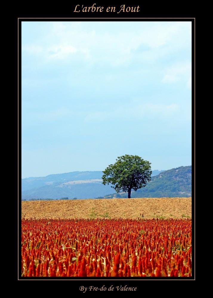L'arbre en Aout