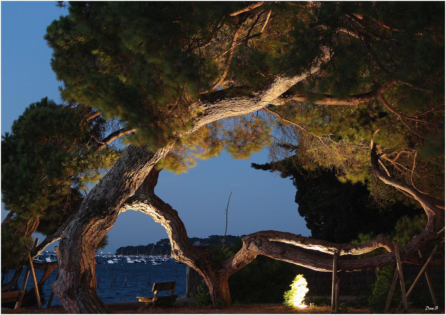 L'arbre - face à la chapelle algérienne - boulevard de la plage - Lège Cap Ferrer
