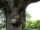 l'arbre humain