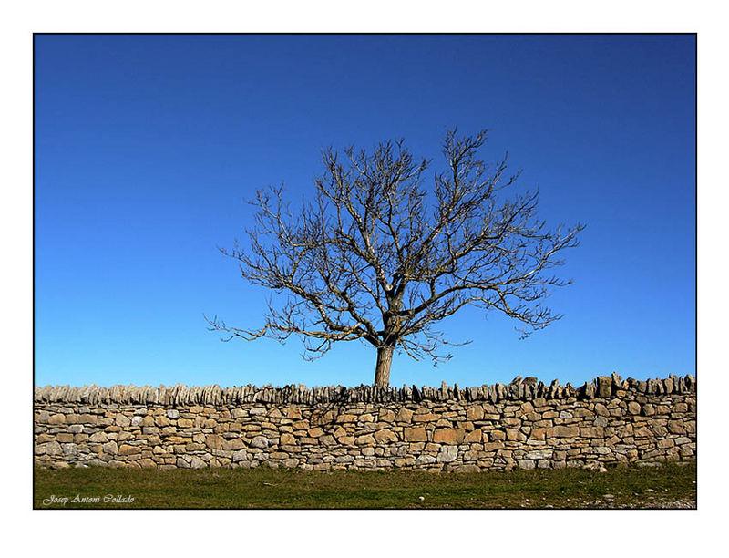 L'Arbre i el Mur - The Tree and the Wall