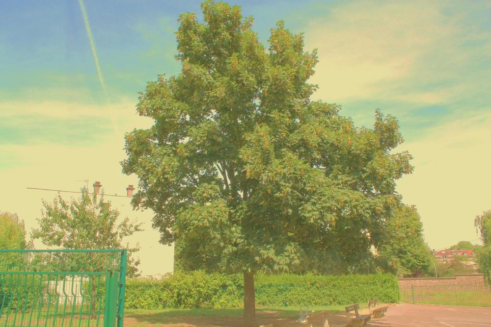 L'arbre magique?