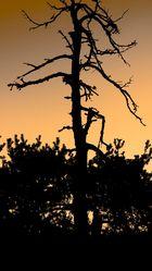 L'arbre orange