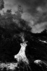 L'arbre qui est tombé de la falaise