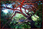 L'arbre rouge.