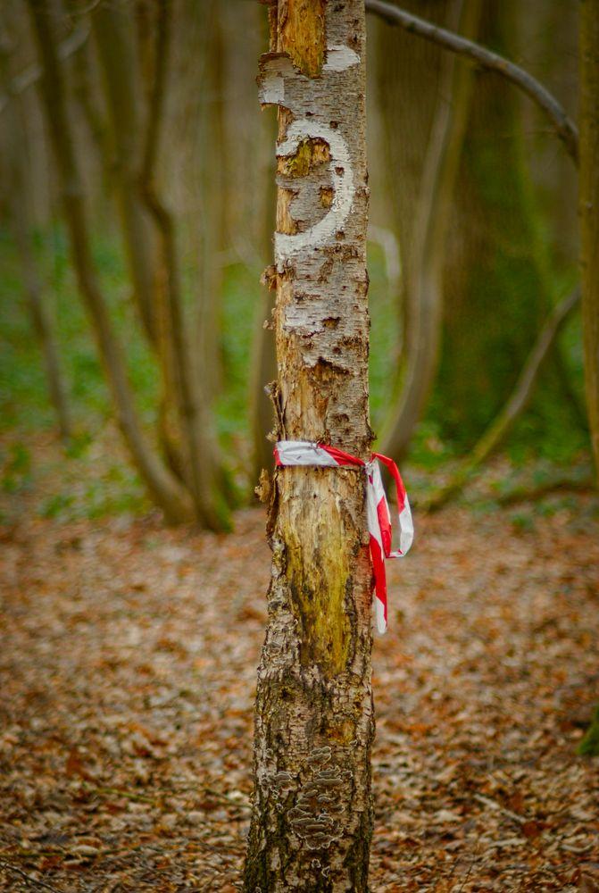 L'arbre signalitique