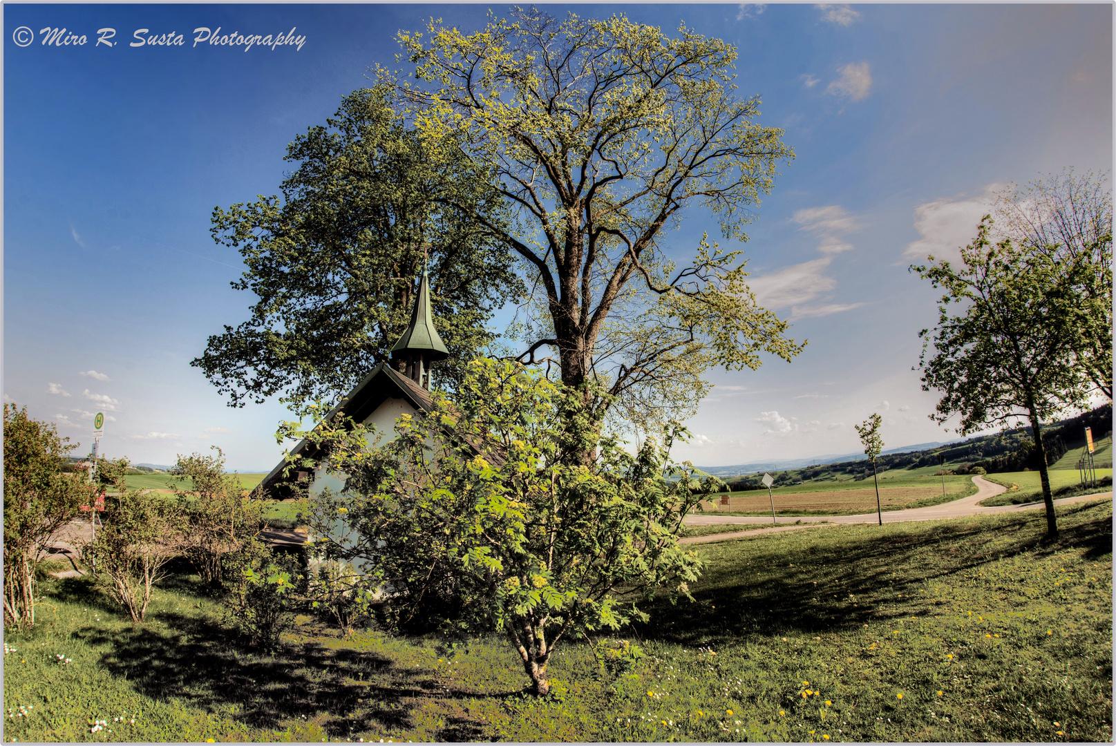 Large tree & small chapel