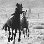 l'aria del Paradiso è quella che soffia tra le orecchie di un cavallo