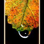 Larme de feuille en automne
