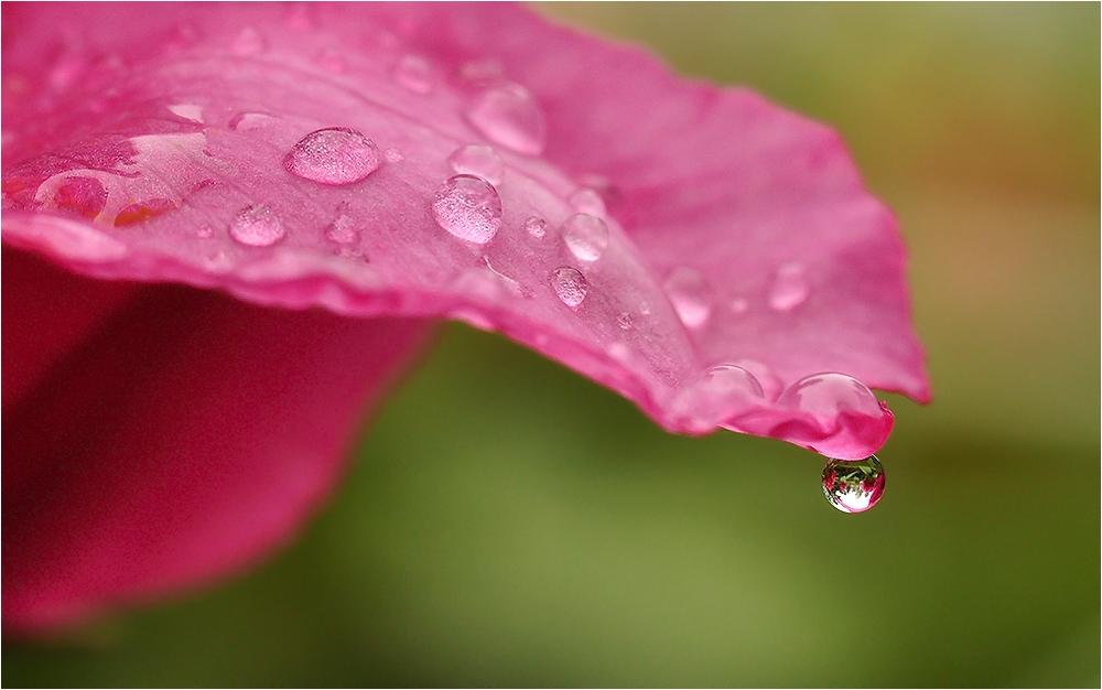Larme de pluie...