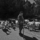 Las cabras