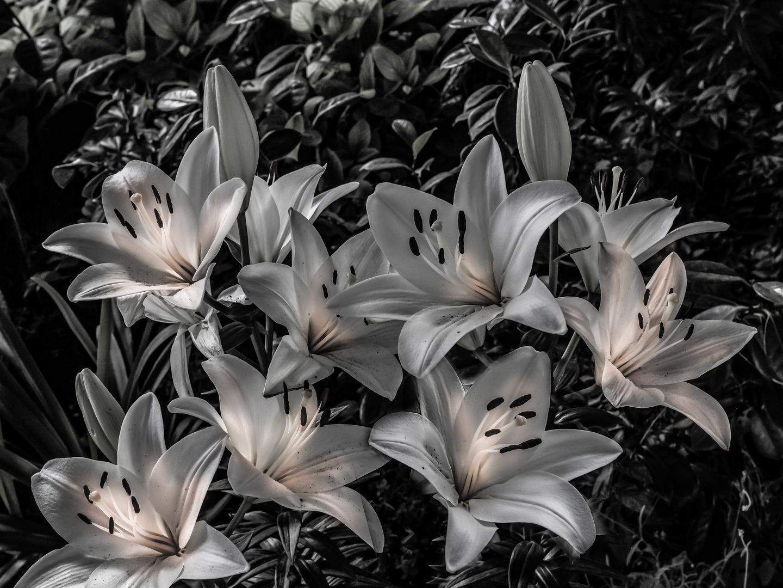 Las flores de Dubronik