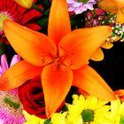 las flores y su vivo color