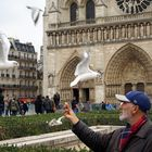 ...las gaviotas de Notre Dame...