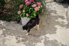 Las hortencias y el gato